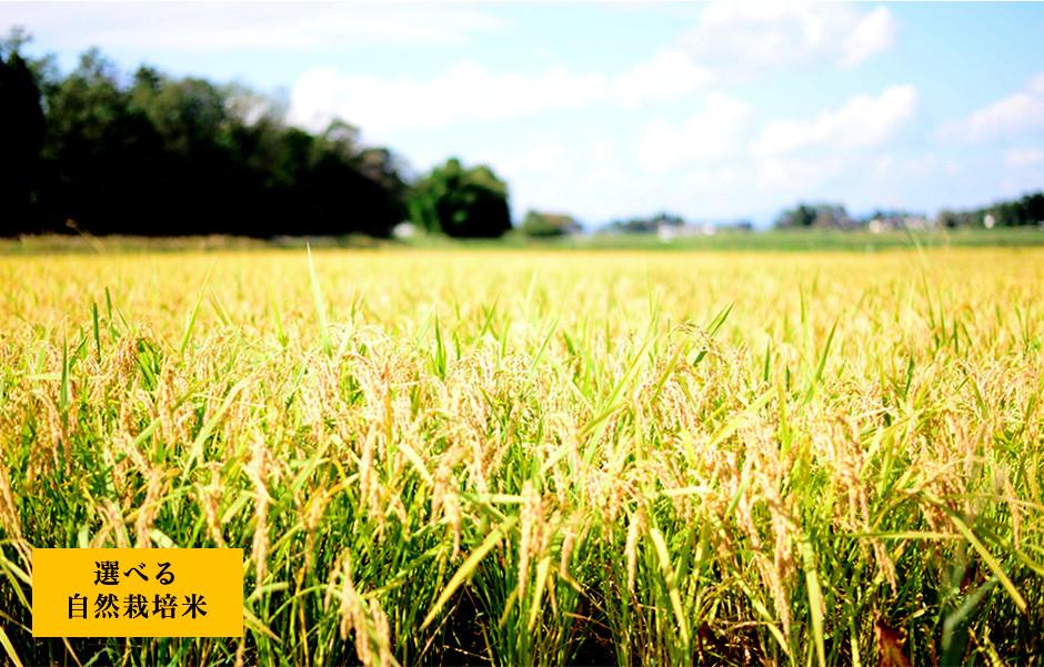 選べる自然栽培米