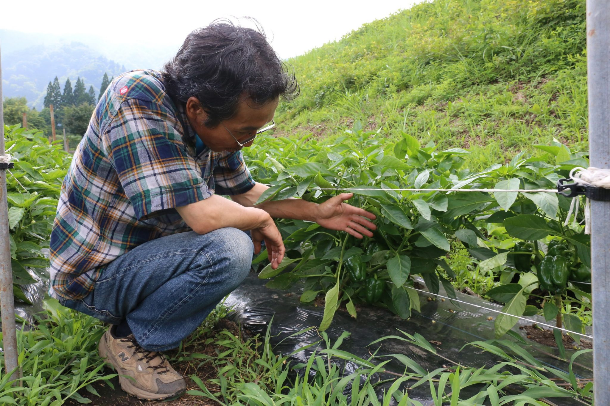 【1/25土】農家さんの種取りワークショップ ~稲倉さんの自家採種と自然栽培のお話~